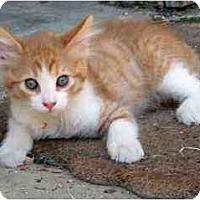 Adopt A Pet :: Max - Davis, CA