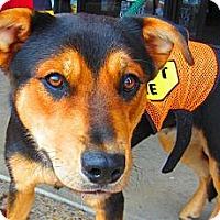 Adopt A Pet :: Valentine - Alexandria, VA