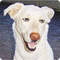 Adopt A Pet :: Suki - Orange Park, FL