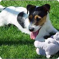 Adopt A Pet :: Marcy - Scottsdale, AZ