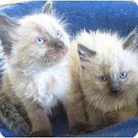 Adopt A Pet :: Jake & Joey - Davis, CA