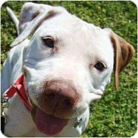 Adopt A Pet :: Starlight - Gilbert, AZ