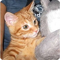 Adopt A Pet :: Red Fred - Deerfield Beach, FL