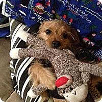 Adopt A Pet :: Arthur - Sunnyvale, CA