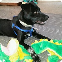 Adopt A Pet :: JAKE - Boca Raton, FL