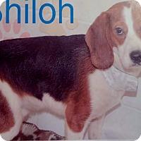Adopt A Pet :: Shiloh - Delaware, OH