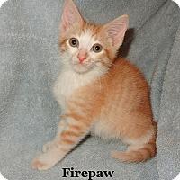 Adopt A Pet :: Firepaw - Bentonville, AR