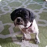 Adopt A Pet :: Wicket - East McKeesport, PA