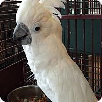 Adopt A Pet :: China - Punta Gorda, FL
