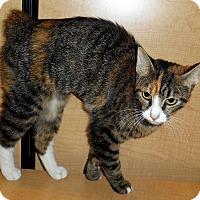 Adopt A Pet :: Dora - Chattanooga, TN