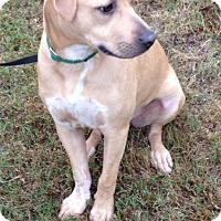 Adopt A Pet :: Lucky - Alpharetta, GA
