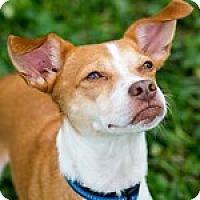 Adopt A Pet :: Rio - Miami, FL