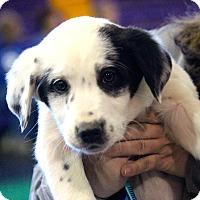 Adopt A Pet :: Elizabeth~ meet me! - Glastonbury, CT