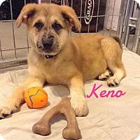 Adopt A Pet :: Keno - Bartonsville, PA