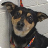 Adopt A Pet :: SLINKY-Low Fees, neutered/Chip - Red Bluff, CA