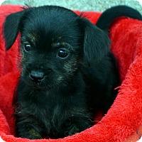 Adopt A Pet :: Fleetwood - Bridgeton, MO