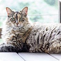 Adopt A Pet :: Sassy - Cincinnati, OH