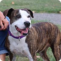Adopt A Pet :: Brin - Elyria, OH