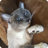 Adopt A Pet :: Frankie - Seattle, WA
