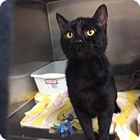 Adopt A Pet :: Rumtum - Janesville, WI