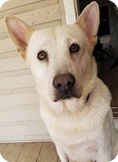 German Shepherd Dog Mix Dog for adoption in Hanover, Pennsylvania - ohana
