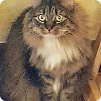 Adopt A Pet :: Laney - Colmar, PA