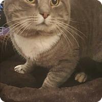 Adopt A Pet :: Peter - Griffin, GA