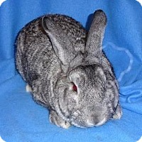 Adopt A Pet :: Nelson - Woburn, MA