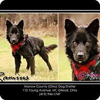 Adopt A Pet :: Ramius - Mt. Gilead, OH