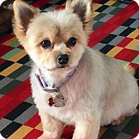 Adopt A Pet :: Pretty 3418 - Toronto, ON
