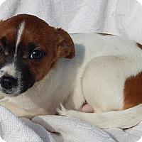 Adopt A Pet :: Oscar (4 lb) Video! - Sussex, NJ