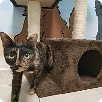 Adopt A Pet :: Mia - Elyria, OH