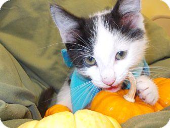 twinkle tush cat