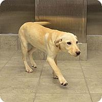 Adopt A Pet :: Dewey - Cumming, GA