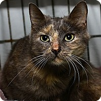 Adopt A Pet :: Cleo - Lombard, IL