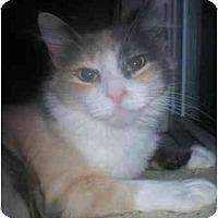 Adopt A Pet :: Cleopatra - Summerville, SC
