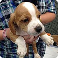 Adopt A Pet :: Jon ~ Adoption Pending - Youngstown, OH