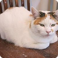 Adopt A Pet :: Fanny - Geneseo, IL
