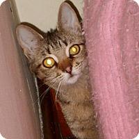 Adopt A Pet :: Helen - Toledo, OH