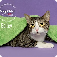 Adopt A Pet :: Bailey - Houston, TX