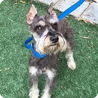 Adopt A Pet :: Frankie - Redondo Beach, CA