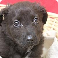 Adopt A Pet :: Yammy - Waldorf, MD