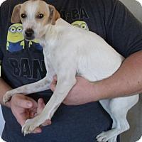 Adopt A Pet :: BARBIE - Corona, CA