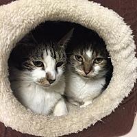 Adopt A Pet :: Ariel & Prospero - New City, NY