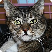 Adopt A Pet :: Queenie - North Branford, CT