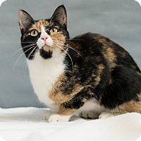 Adopt A Pet :: Claudia - Houston, TX