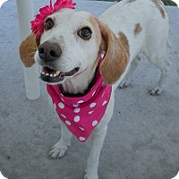 Adopt A Pet :: Juliette - Umatilla, FL
