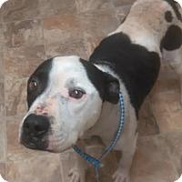 Adopt A Pet :: Sarge - Darlington, SC