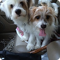 Adopt A Pet :: Snickers & Teddy - Albemarle, NC