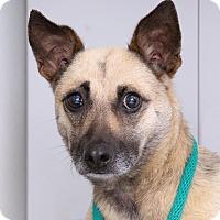 Adopt A Pet :: Peaches - Sudbury, MA